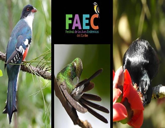 Concluye en Cuba Festival de las Aves Endémicas del Caribe 2021