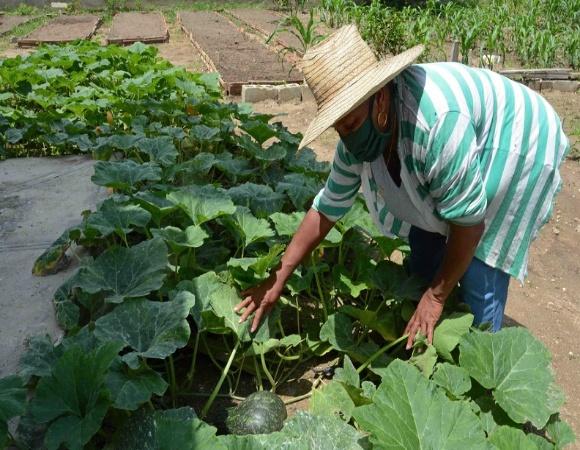Programa de la Agricultura Urbana en Camagüey trabaja por incrementar sus rendimientos