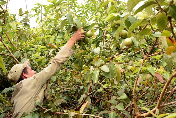 Agricultores cubanos demandan más exportaciones para la sostenibilidad alimentaria