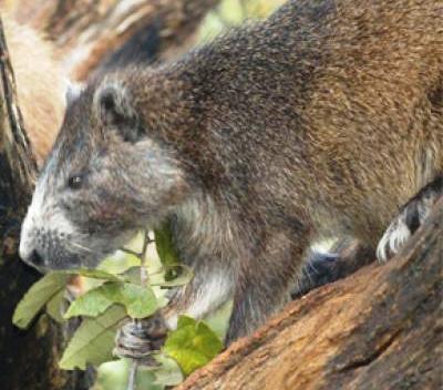 Promueven en Cuba protección de especie endémica
