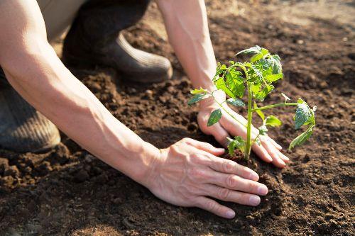 Proyecto de cooperación con ONU introducirá en Cuba métodos agrícolas para conservación de la biodiversidad