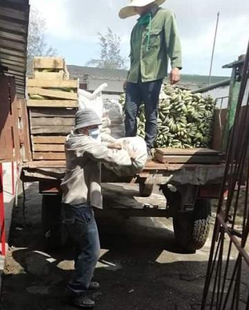 Incentivan siembra de ciclos cortos en municipio camagüeyano para garantizar alimentos ante la COVID-19