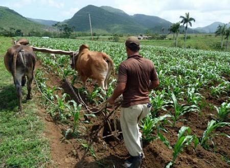 Promueven en Camagüey manejo sostenible de tierras mediante la investigación científica