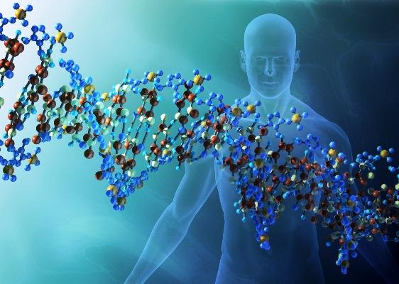 Solo el 25 % del ADN humano es funcional, según estudio
