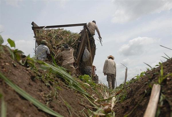 Reconoce el Sindicato de Trabajadores Azucareros a bases productivas camagüeyanas