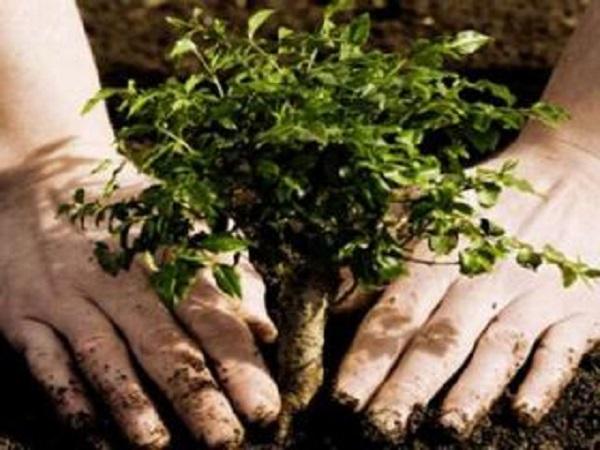 Con estrategias para mejorar su labor los Trabajadores Forestales saludan su día