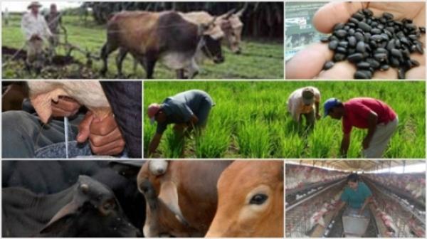 Evalúan en Camagüey prioridades de su encargo social Agropecuarios, Forestales y Tabacaleros