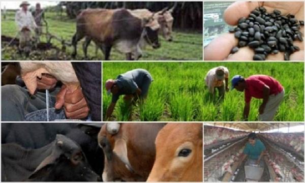 Señalan en Camagüey nuevas metas en la producción de alimentos