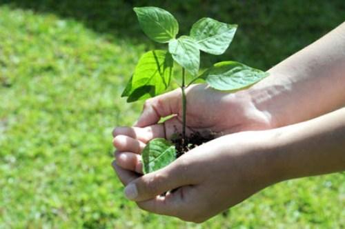 Promueven en Cuba proyecto de agricultura sostenible