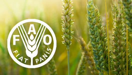 Reconoce FAO esfuerzos de Cuba en la protección del suelo