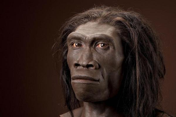 La pereza contribuyó a la extinción del Homo erectus, afirman científicos