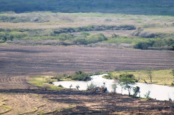 Nuevas tierras para sembrar alimentos, cerca de aguadas.