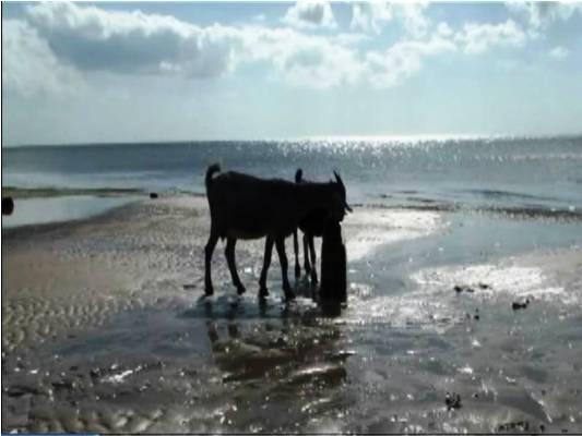 Pozo de agua en Playa Florida que tras el ascenso del nivel medio del mar ahora se encuentra dentro del mar.