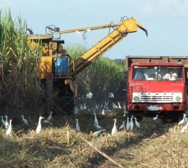 Camagüey recibe la zafra con mayores compromisos productivos