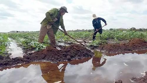 Ministerio de Agricultura diseña estrategia para perfeccionamiento empresarialante la Tarea Ordenamiento