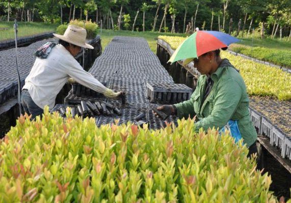 Empresa Agroforestal Integral de Camagüey implementa acciones para repoblar áreas boscosas
