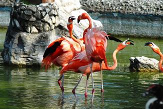 Zoológico de Camagüey, un oasis para el sano esparcimiento