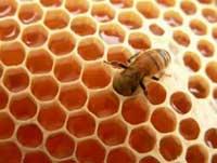 Reporta Camagüey significativo crecimiento en acopio de miel de abeja