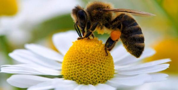 El universo de las abejas atrae a niños cubanos