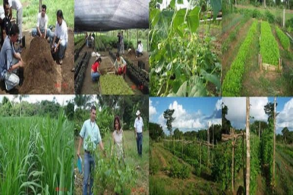 Promueven en Camagüey prácticas agroecológicas por el desarrollo sostenible