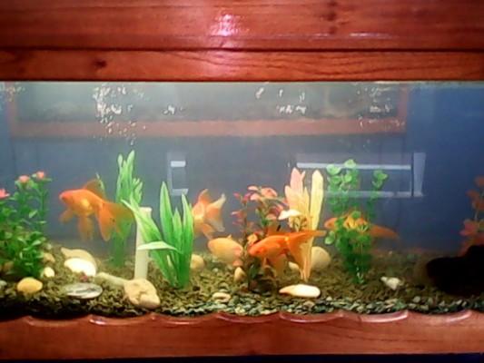 Abren en zona patrimonial de Camagüey acuario con fines educativos