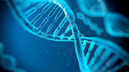 Descubren cómo crear aplicaciones tecnológicas con ADN