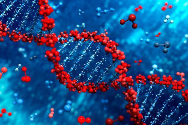 Errores en la replicación del ADN se heredan por generaciones, según estudio