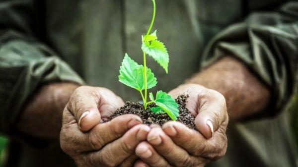 Fomentan en Camagüey la siembra de árboles maderables y frutales