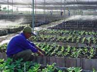 Celebrado en Camagüey quinto aniversario del programa de la agricultura suburbana