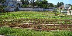 Intercambian productores franceses con campesino camagüeyano