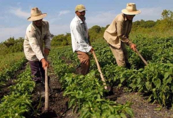 Campesinos de varias latitudes abogan desde Cuba por mayor uso de la agroecología