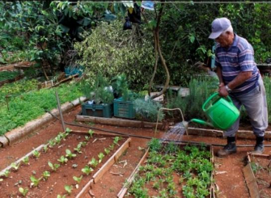 Contribuye a la producción de alimentos en Camagüey la agricultura familiar