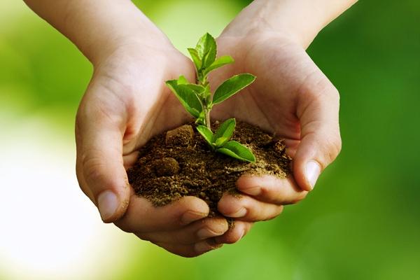 Camagüey apuesta al desarrollo sostenible de su agricultura