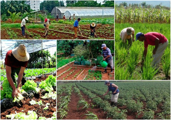 US blockade strongly affects Cuban agriculture