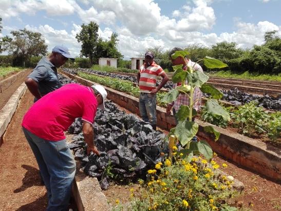 Chequean en Sierra de Cubitas programa de la Agricultura urbana y suburbana (+Fotos)