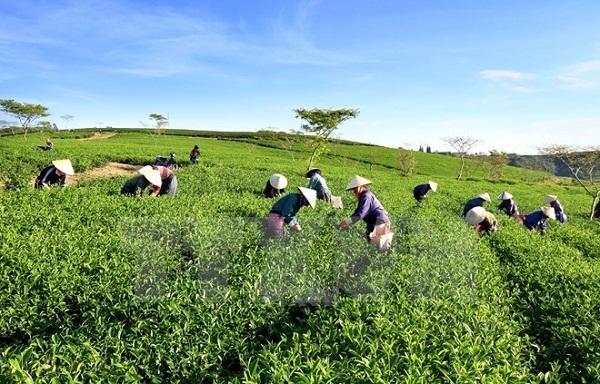 Crece, se diversifica y moderniza la agricultura vietnamita