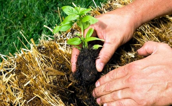 Manejo agroecológico en Camagüey favorece conservación de los suelos