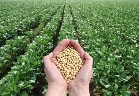 Soberanía alimentaria en Encuentro Internacional de Agroecología