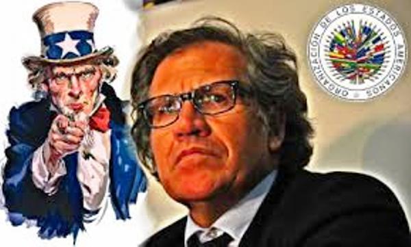 Denuncian injerencia de la OEA en decisiones de Bolivia