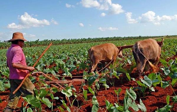 Organizan campesinos camagüeyanos proceso orgánico previo al XII Congreso de la ANAP