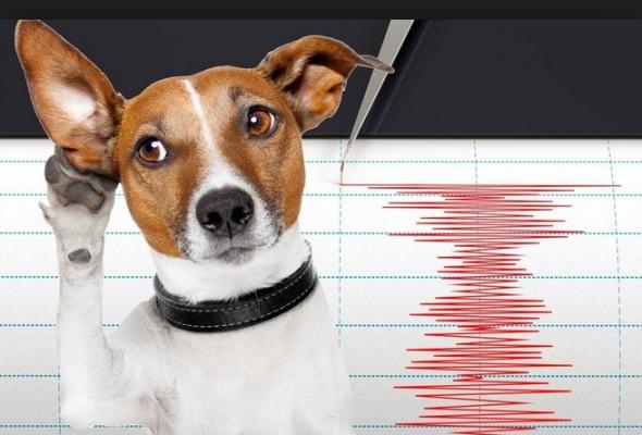 Animales que predicen terremotos: ¿mito o realidad?