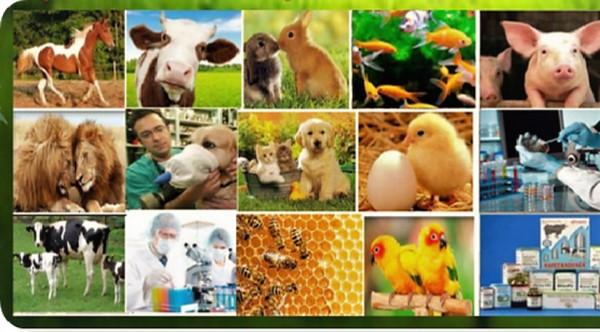 Entra en vigor hoy Decreto-ley de Bienestar Animal