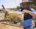 Camagüey: Honey Production for the Exportation Makes Good Progress