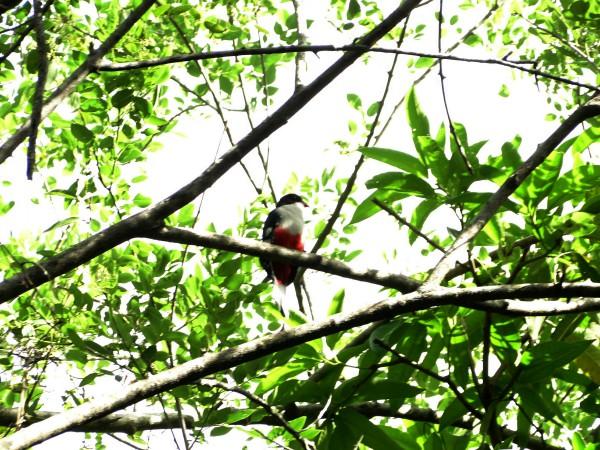Turismo de naturaleza en Camagüey: un sendero por andar (+Fotos)
