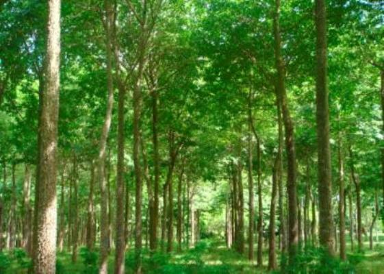 Cuba incrementa sus áreas boscosas