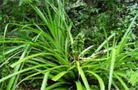 Estudian especies invasoras a reserva ecológica de serranía camagüeyana