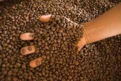 Expertos de 11 naciones asistirán en Cuba a Congreso de Café y Cacao