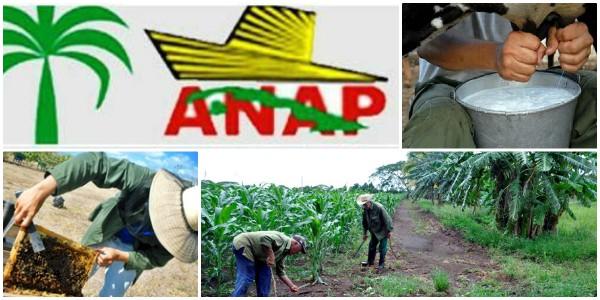 Campesinos camagüeyanos laboran por el autoabastecimiento territorial