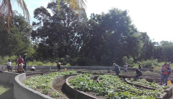 Contribuyen jóvenes camagüeyanos a preservar el medioambiente (+ Audio y Fotos)