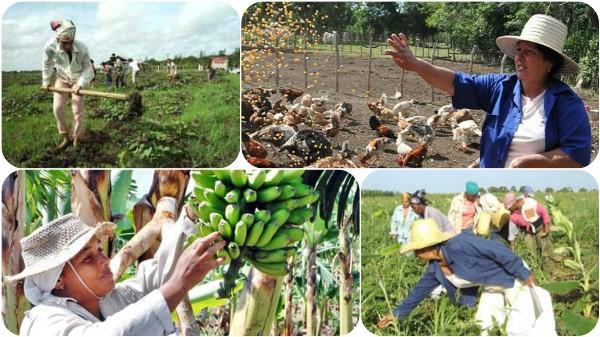 Aportan mujeres campesinas al crecimiento económico del Camagüey